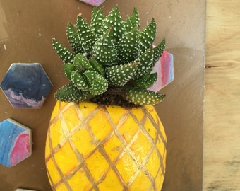 Pineapple succulent magnets