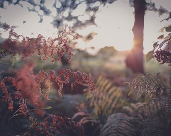 Autumnal Bracken #3