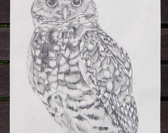 Original Owl graphite pencil drawing 11.5x18.5