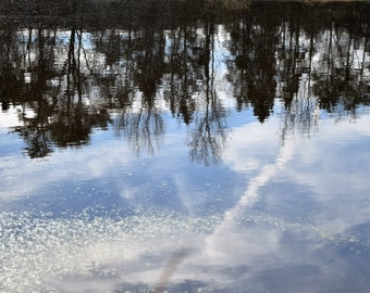 Pond Reflection Photograph, Wall Art, Trees in Water