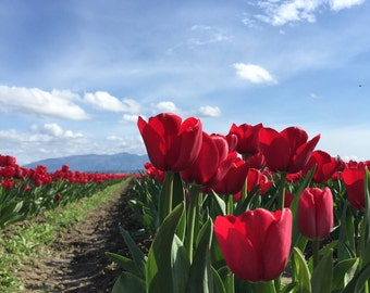 Valley of the Tulips