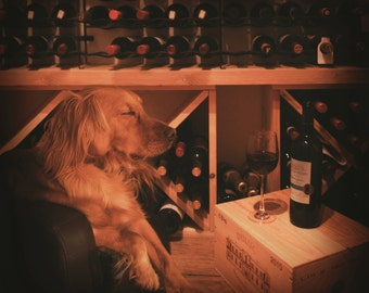 Photographic Print - Wine Sommelier - Dog with wine! - Photography of Dogs