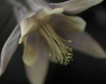 Flower Southern Illinois Fine Art Photograph 8x10
