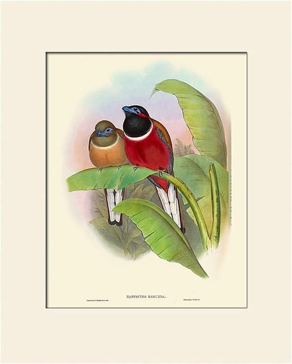 Bird Print, Trogon, Tropical Bird, John Gould, Art Print with Mat, Natural History Illustration, Wall Art, Wall Decor