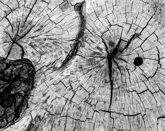 Black and White Note-cards - Ocean and Stump