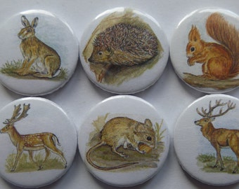 Fridge magnets forest animals