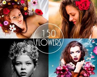 Flower Overlays, Flower Clipart, Flower Clip Art, Photoshop Layer, Flowers Transparent Background PNG, Instant Download
