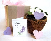 2 Seed Paper Mothers Day Garden Box Favors - Gift Box Set with Plantable Pots - Mother's Day Thank you - Gardening Flower Seed Planter Herbs
