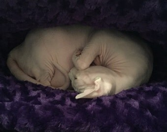 """Cat Bed - Snuggle Sack with SCHNOZ - 19"""" x 23"""" or 24""""x 24"""" - Rose Cuddle Fur - Embroidered Personalization Included"""