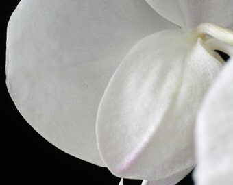 Orchid I - Flower still life  fine art photography
