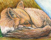 ACEO ATC Red Fox Drawing Original Wildlife Art-Carla Smale
