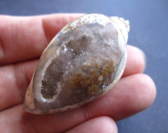 Cambrian Fossil Shell Drusy Window cabochon large size - RARE - 46mm X 23mm - not drilled