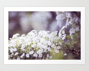 flower photo- white lilac purple- feminine- pretty- nature photo- Tenderness fine art photograph-wall art- pretty home decor