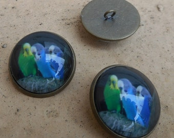 Budgie buttons