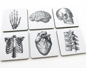COASTERS Anatomy hostess graduation gifts medical student goth skull anatomical heart party favors stocking stuffer geekery brain human body