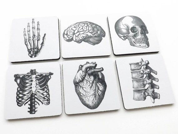 Drink Coasters Human Anatomy hostess graduation gifts medical student goth skull anatomical heart dorm decor stocking stuffer geekery brain