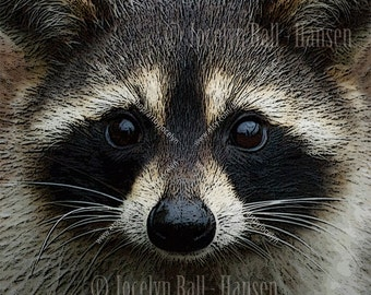 Rabbit and Raccoon Face Wildlife Photography Fine Art Photo Canvas Prints Pair