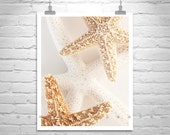 Starfish Bath Art, Seashell Picture, Bathroom Decor, Neutral Color, Art Photography, Bathroom Wall Art, Home Decor, Seashell Decor