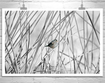 Sparrow Bird Photo, Wetlands Bird Art, Bird Print, Bird Photography, Wildlife Art, Nature Photography, Black and White, Fine Art Photography