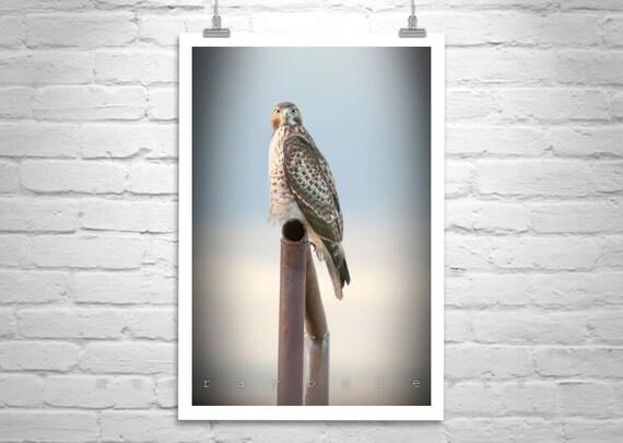 Hawk Art, Red Tail Hawk, Hawk Photography, Bird Art, Bird Photography, Hawk Print, Wildlife Art, Wildlife Photograph, Vertical Print