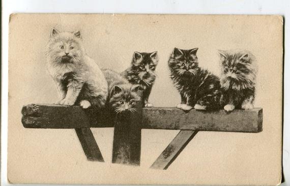 Cats postcard Real Photo antique postcard, vintage Postcard, Real Photo, cat postcard
