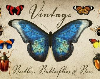 INSTANT DOWNLOAD - Vintage Beetles, Butterflies & Bees Graphics
