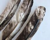 TURKEY QUILL, Natural, brown snd beige, 4 pieces   /  Q - 2