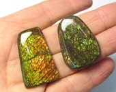 Rare Ammolite Cabochon, Colorful Fiery Green Gold Orange Cabochon, Red  Fossil Cabochon Ammonite,  Your Choice QTY1
