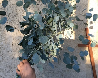"15"" long Eucalyptus Branches with Leaves, Eucalyptus Branch Bundle. Eucalyptus Banana Leaves/Long Stems"