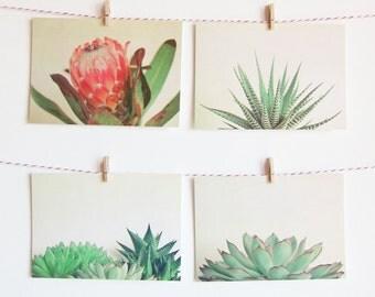 Postcard Set, Plant Photography, Succulents, Protea, Nature Photography, Affordable Art - Botanicals