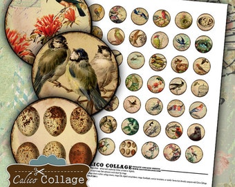 Vintage Birds, Digital Collage Sheet, Printables, Images for Pendants, Bottle Cap Images, Calico Collage, Digital Sheet, Decoupage Paper