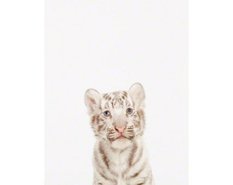 Baby White Tiger Little Darling. Animal Wall Art. Baby Animals Nursery Art Print. Animal Nursery Decor. Baby Animal Photos.