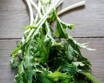 Organic Broccoli Rapini Raab Rabe Heirloom Vegetable Seeds