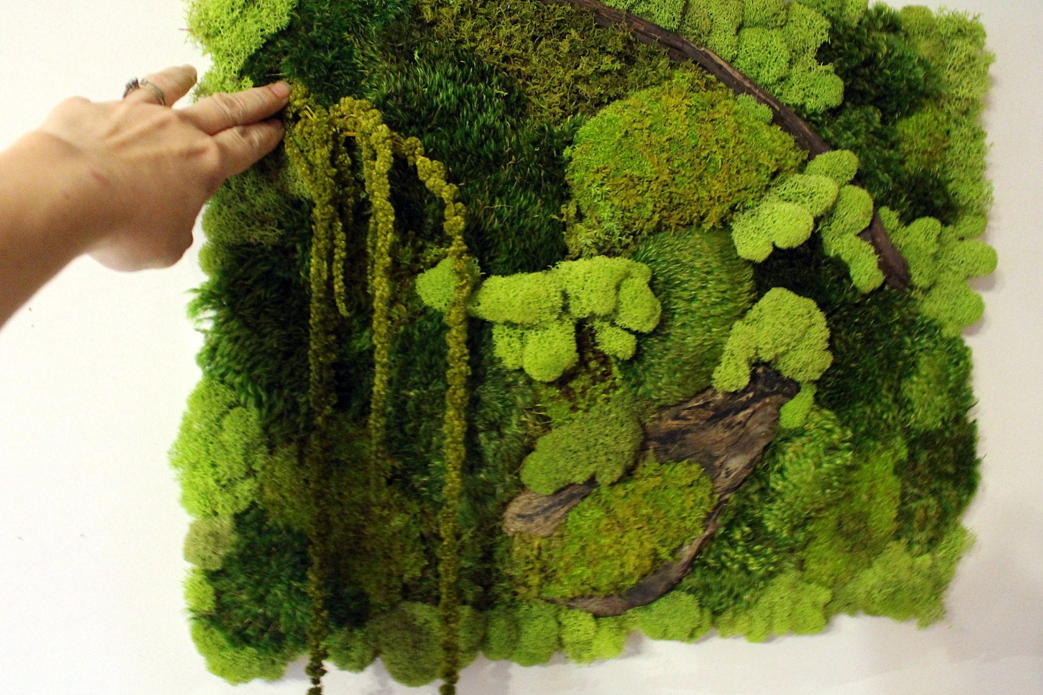 Real Moss Wall Art 16x20 Moss Frame Moss Wall Hanger NO WATER