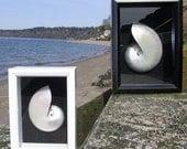 BEACH DECOR NAUTILUS seashell shadow box, pearl nautilus, nautical, coastal, specimen shell shadow box, shell decor