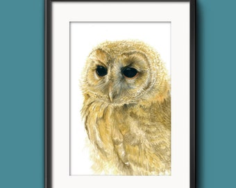 Pale Tawny Owl - Watercolour Art Print (8 x 12 inches)