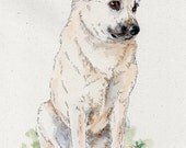 NORWEGIAN BUHUND Original Watercolor on ink print 11x14 Matted Ready to Frame