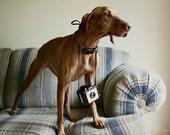 Vizsla Photography, Square Print, Dog Photography, Photographer, Vizsla, Vizsla Art, Pet Photography, Dog Print, Vintage Camera, Dog Art,Pet