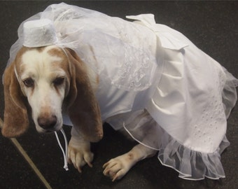 Dog High End Wedding Dress with vail