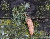 pinecone decor, fine art photography, forest print, woodland nursery, nature home decor, rustic pinecone print, cabin decor, sugar pine cone