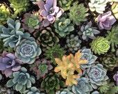 6 Succulent Plants, Terrarium Projects, Succulent Favors, Centerpieces, Container Gardens, Terrariums, A Nice Collection