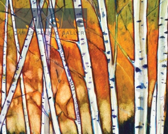 Birches No. 2 Watercolor Art Print by James Steeno