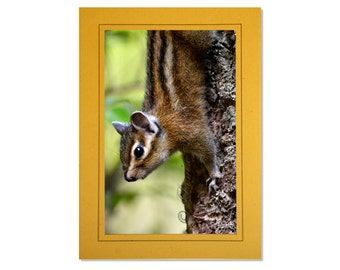 Cute Chipmunk Card - Custom Chipmunk Photo Cards - Chipmunk Cards for Kids - Chipmunk Birthday Cards