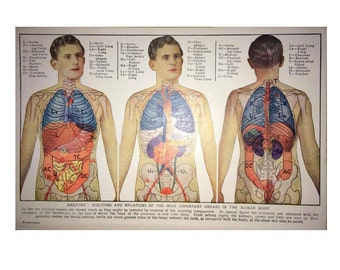 1945 ORGANS HUMAN ANATOMY lithograph original vintage medical science print body innards