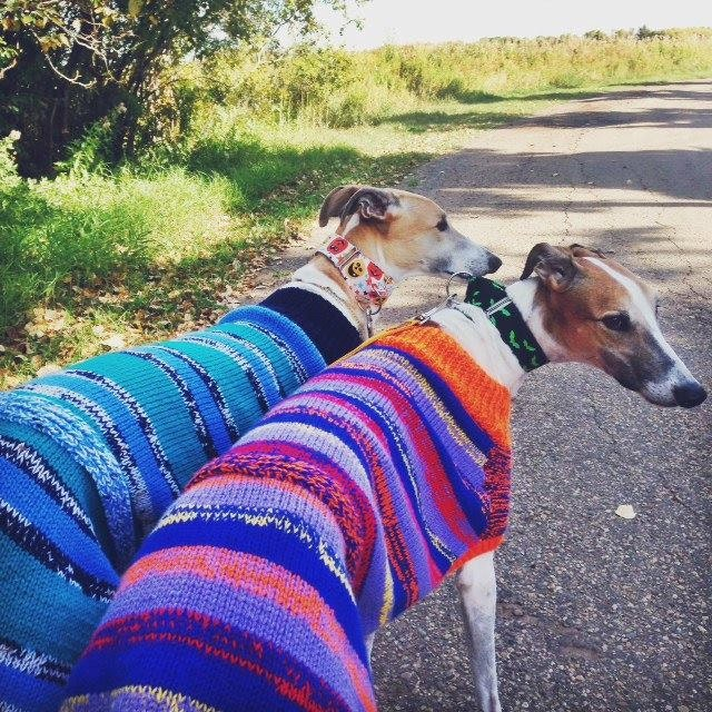 Knitting Pattern For A Greyhound Coat : Knitted Greyhound Coat download knitting pattern