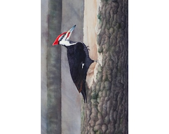 Pileated Woodpecker Watercolor Painting - Fine Art Archival Print - Limited Edition Bird Art by Laura D. Poss