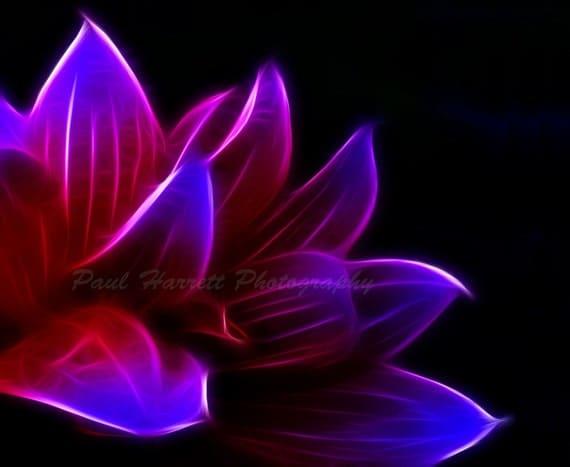 """Flower Photography - Photo Art - Fine Art Photography - Wall Art Deco - Fractal Abtract-flower- 8 X10""""  Kodak Metallic Paper"""