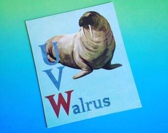 Vintage Animal Flash Cards Alphabet - Walrus