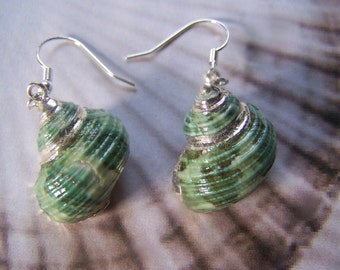 Shell Earrings Silver Electroplating
