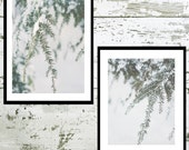 Photo Print Set, Snowy Pines, Branches, Winter Wall Art, Soft Gray and Green Art, Photography Prints, Wall Set, Home Decor
